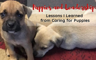 Puppies and Leadership: Lessons I Learned from Caring for Puppies